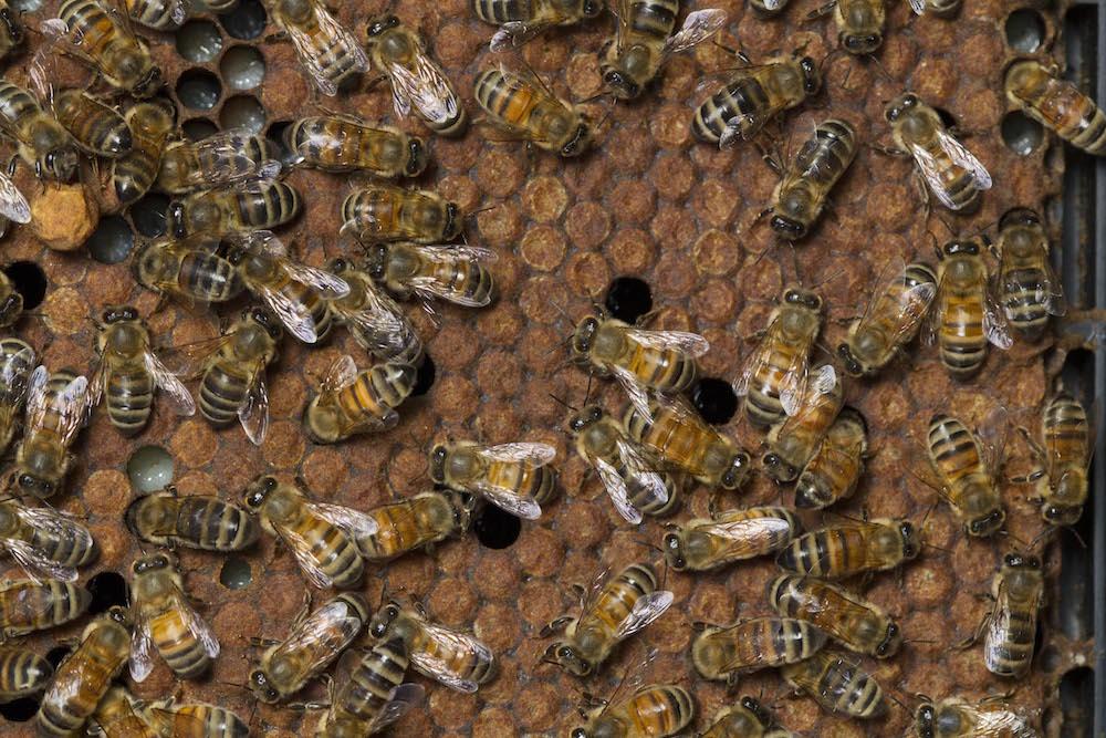 Honey-5221